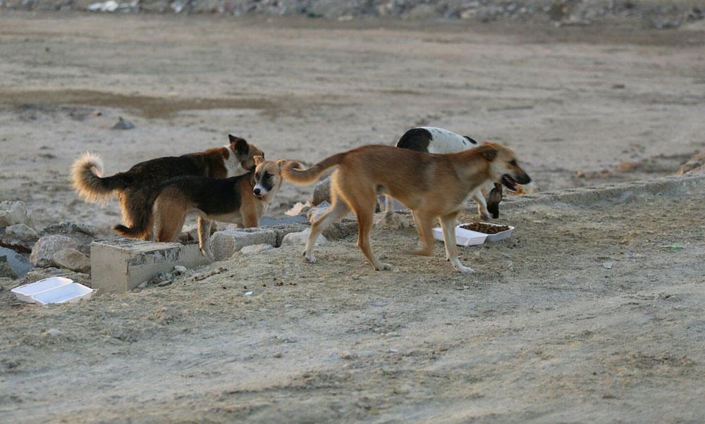 حي النور: انتشار ظاهرة  الكلاب السائبة  يثير هلع الاهالي