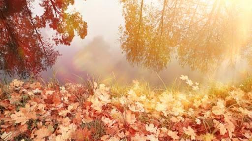 اليوم: أوّل أيّام فصل الخريف