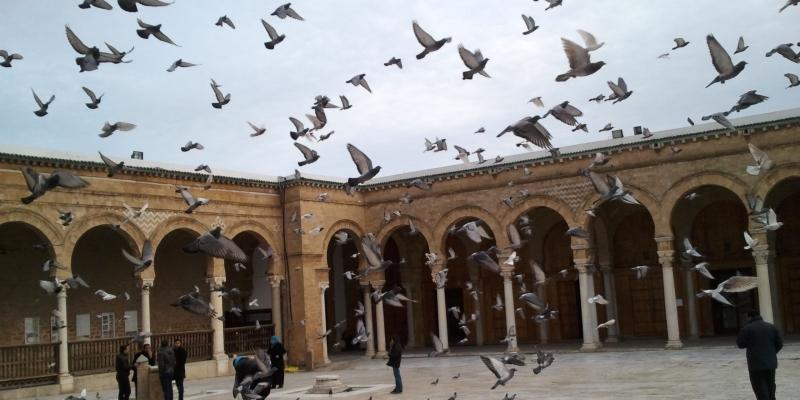 غديرة: نحو إقرار الحجر الصحي على هذه الفئات ومنع التنقل بين الولايات والمدن