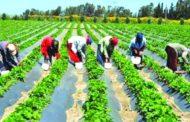نيجيريا: قتل 43 مزارعا