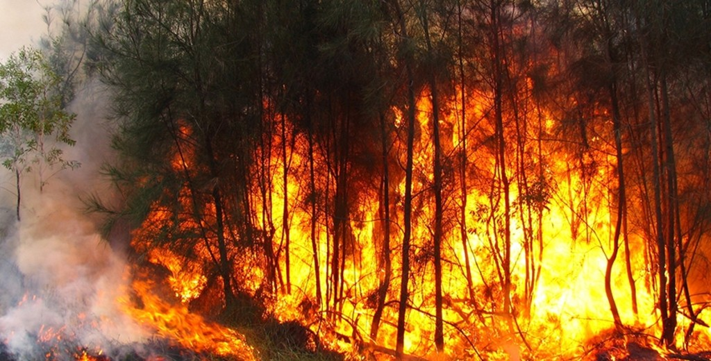 الجزائر : موجة من الحرائق المهولة تخلف قتيلان وخسائر مادية فادحة