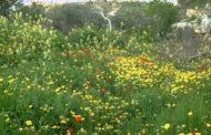 اليوم :دخول فصل  الربيع